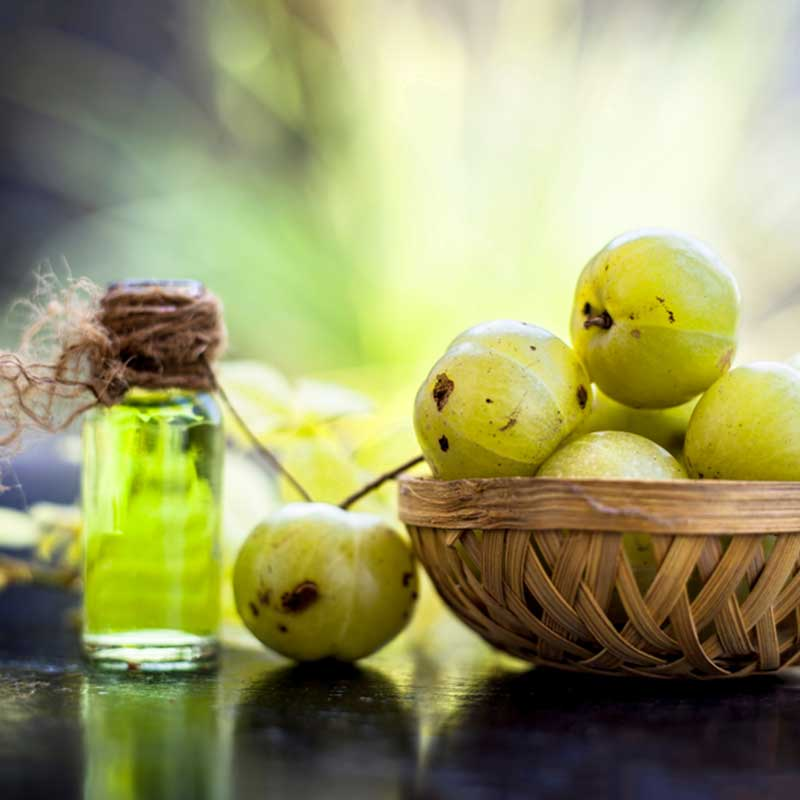 Amla Amalaki Indian Gosseberry Emblica officinalis svježi plod