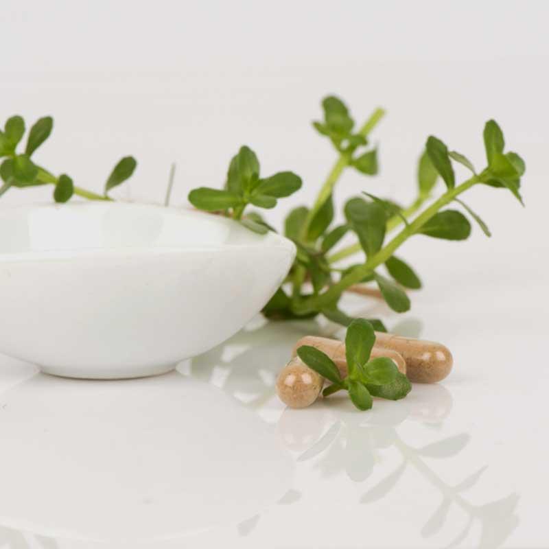 Brahmi kapsule Bacopa monnieri Bacopa biljka bijela zdjela