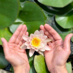 Podrška lotos u rukama Lotus between hands Ayurvedski pregled konzultacije
