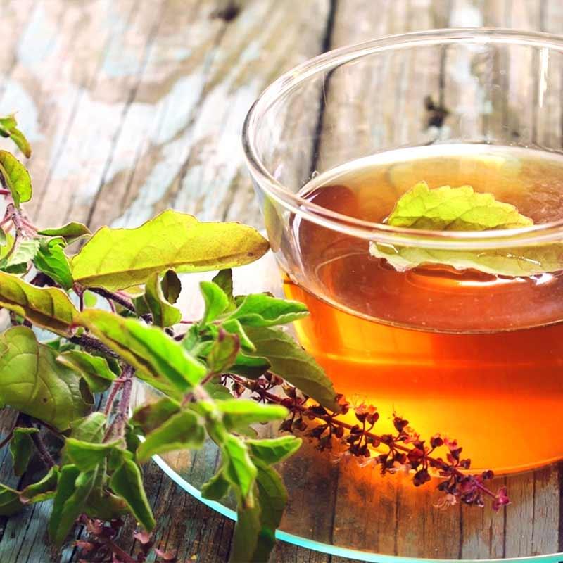 Tulsi Sveti bosiljak Ocimum sanctum čaj u čaši i biljka list cvijet sveže ubrani