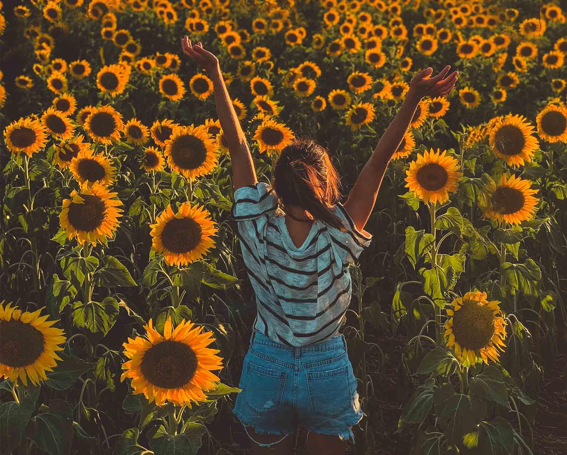 Ljeto godišnje doba djevojka u polju suncokreta