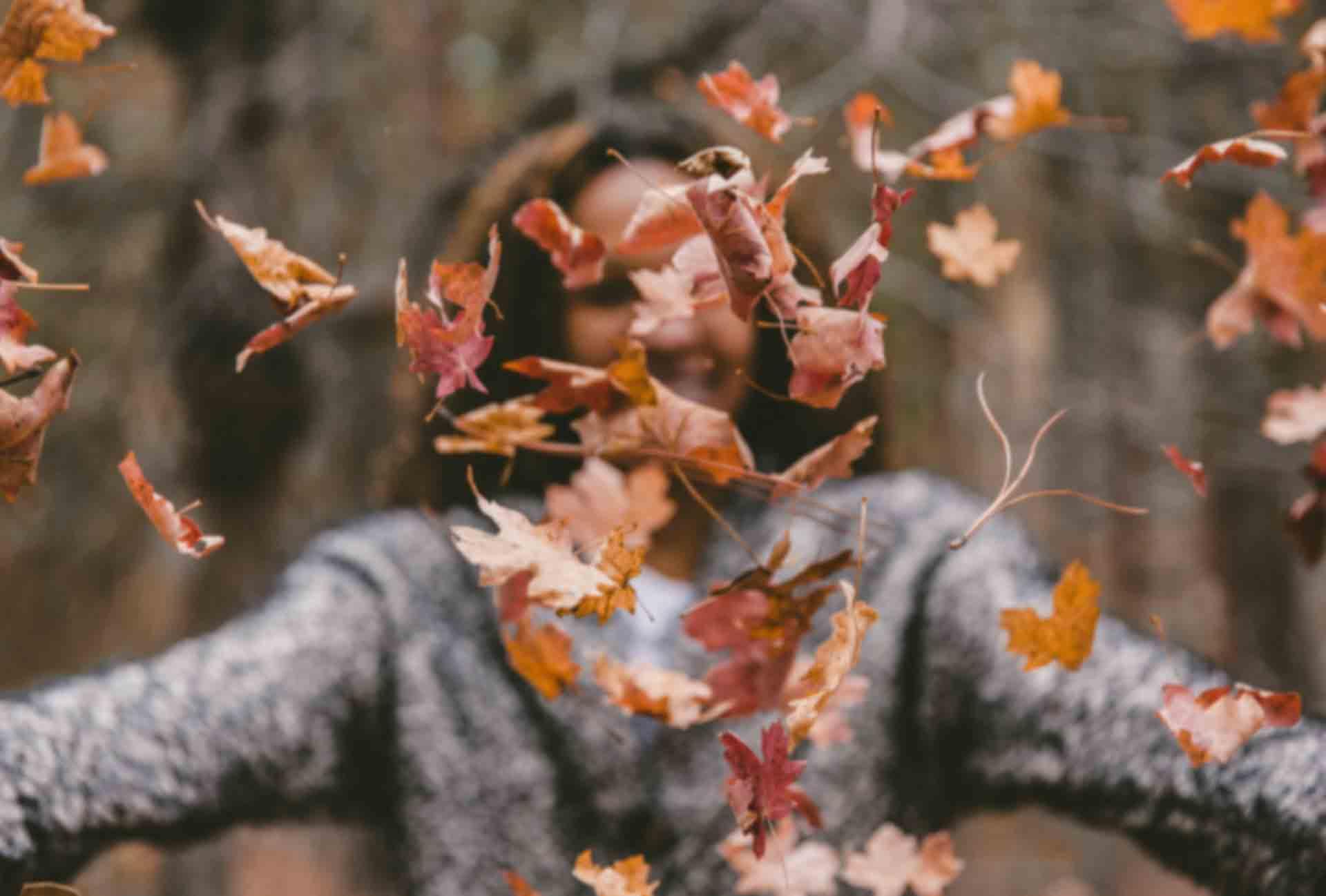 Suho lišće jesen u šumi kvalitete Vata doshe